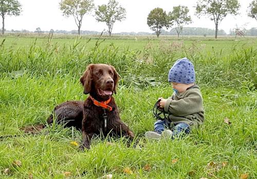 Versicherungskontor Krautsand, Hundeversicherung